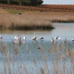 """Humedales de la Mancha, donde """"Conocer para Conservar"""" se hace realidad"""