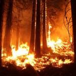Más de la mitad de los incendios se detectan gracias a la colaboración ciudadana