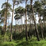 Castilla y León, Navarra, y La Rioja y a la cabeza en gestión forestal sostenible