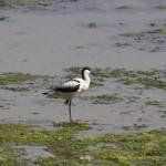 Doñana en situación de alerta
