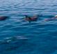 censo delfines