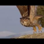Día Mundial de las Aves 2016