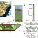 Los residuos de medicamentos afectan seriamente a los organismos acuáticos