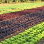 Andalucía quiere valorizar sus residuos hortícolas