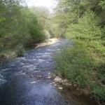 La restauración fluvial, clave para la conservación de especies autóctonas
