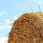 La Unión Europea promueve la reutilización de residuos agrícolas