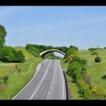 Ecoductos para paso de fauna en carreteras