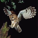 Programa de Seguimiento de Avifauna 2015