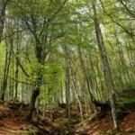 Actividades Ambientales 4 – 6 de Noviembre