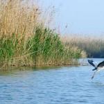 UE corregirá las deficiencias de las directivas de Hábitat y Aves