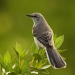Las aves migratorias contribuyen a regular los ciclos de energía de los ecosistemas