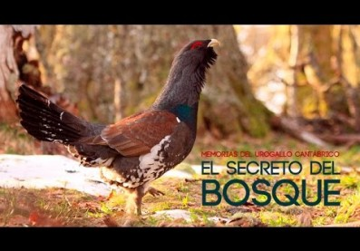 "Documental ""El Urogallo Cantábrico"""