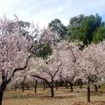 Actividades Ambientales 3 – 5 de Marzo