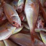 E 93% de las especies del mediterráneo sufren sobrepesca