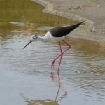 Una treintena de entidades de la cuenca del Ebro defienden un plan de gestión de sedimentos