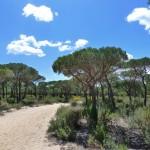 WWF se opone al proyecto de una autopista por el norte de Doñana