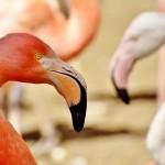 La Unesco debatirá hoy sobre la situación del Parque Nacional de Doñana