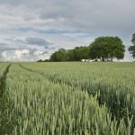 Los agricultores orgánicos europeos lanzan una hoja de ruta para implementar su 'Visión Ecológica 2030′