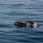 Los ocho compromisos de España para salvar sus océanos