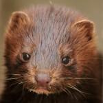 Expertos piden incluir 207 nuevas especies en la lista de exóticas invasoras de la UE
