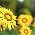 La Eurocámara aboga por impulsar el uso de fertilizantes orgánicos en la UE