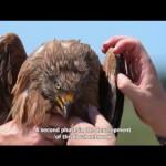 Geolocalización de fauna en Doñana