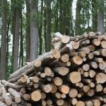 Biomasa, la alternativa energética que puede cubrir la demanda española de casi un mes