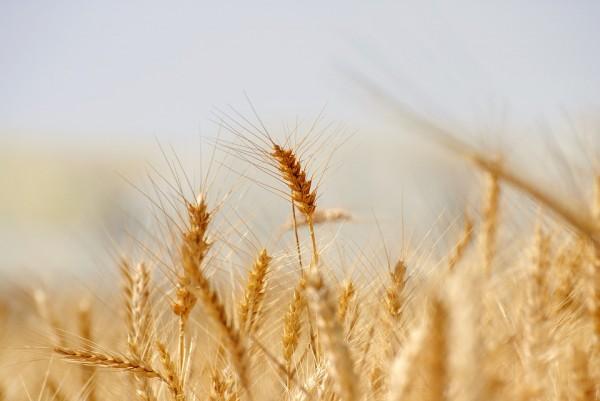 Incorporar la visión científica y ambiental a la Política Agrícola Común PAC