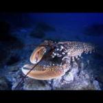 La conservación del mar Mediterráneo