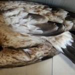 Primera sentencia firme contra una empresa eléctrica por la electrocución de aves