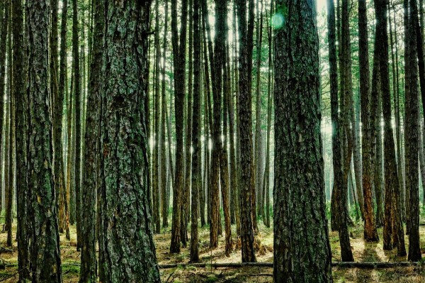 Plan de actuación forestal