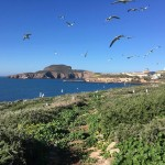 El Gobierno declara Zona de Especial Conservación (ZEC) el Lugar de Importancia Comunitaria (LIC) Islas Chafarinas, dentro de la Red Natura 2000
