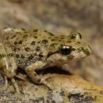 La conservación de la Biodiversidad
