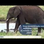 UICN – 70 años Unidos por la vida y el desarrollo