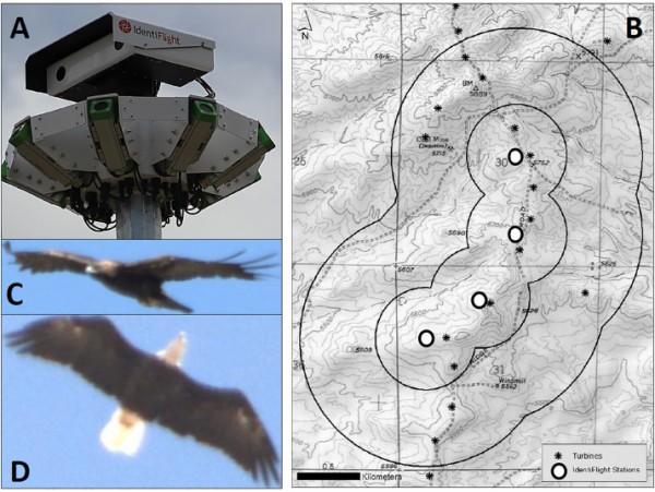Datos de satélite de los movimientos migratorios de 7 adultos de aguilucho lagunero (Circus aeruginosus). Fuente: Vardanis et al. 2011. Biology Letters 7(4): 502–505.