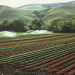 La agricultura consume un 70% del agua a escala global