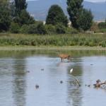 Parque de Salburua, caso de éxito en la restauración de espacios degradados