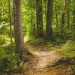 La Tierra tiene hoy más bosques que en 1982
