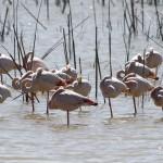 La guardia civil tiene que intervenir para cerrar pozos ilegales en Doñana