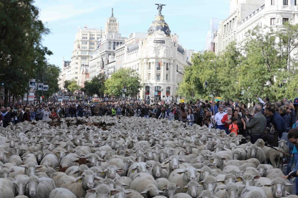 La Fiesta de la Trashumancia en Madrid