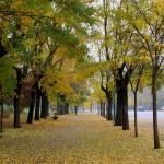 Actividades Ambientales 2- 4 de Noviembre