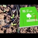 La contaminación del suelo, una realidad oculta.