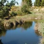 Madrid rescatará tres lagunas en el limbo con su plan de humedales