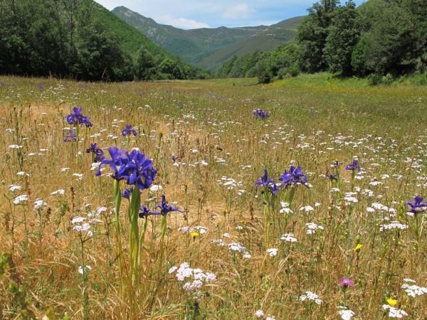 Avanzando hacia una Política Agrícola Común más verde