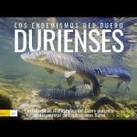 Durienses, los endemismos del Duero