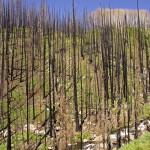 Un estudio detecta la recuperación vegetal tras un incendio con imágenes de satélite