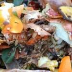 La orgánica en selectiva: motor de la economía circular de los residuos