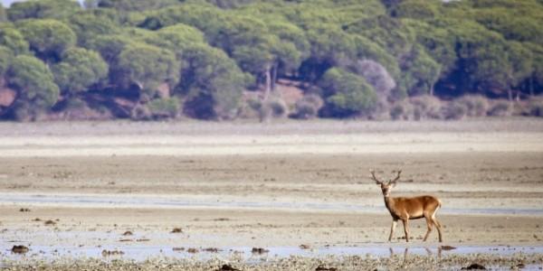 El Parlamento Europeo quiere un informe conjunto sobre los proyectos de gas en Doñana