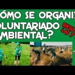 ¿Cómo se organiza una actividad de voluntariado ambiental?