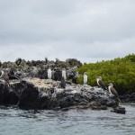 Ser Ambientólogo en Latinoamérica
